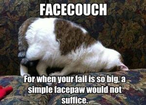 caturday_cat_memes_09